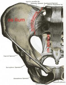 Grafik Hüftknochen