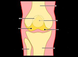 Grafische Darstellung Knie
